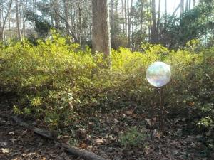 Azaleas w gazing globe