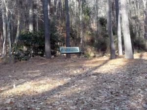 Judy's bench