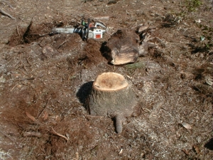 stump chainsaw