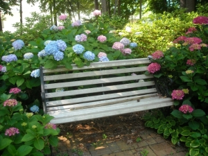 All Summer Beauty and bench