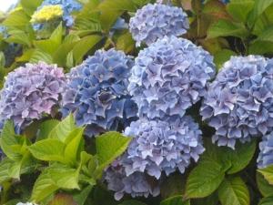 Mass of blue