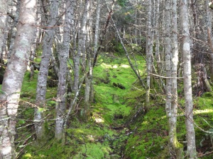 TGhe woods are inviting. Photo by Northeast Hiker