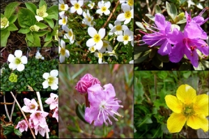 A stunning montage of spring blooms by 1happyhiker