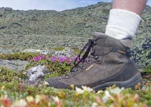 Hiker's boot, death to alpine plants. Tim Jones photo
