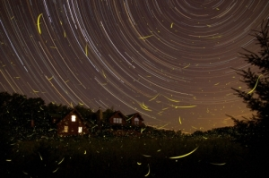 Fireflies and star trails in this time lapse photo. From www.firefly.org