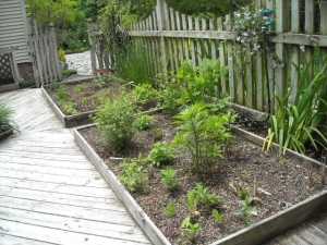 Experimental planting beds in spring