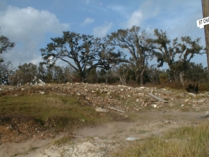 Land denuded except for oaks. Note the lean away from the shore