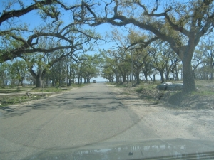 We travelled this parklike road to and from the beach. Once there were houses all along it. Photo by Margie Kieper