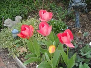 Tulips in our garden in 2012