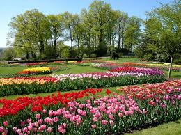Tulips at Hershey Gardens in Pennsylvania