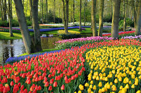 Tulips at Keukenhof Gardens in the Netherlands