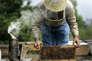 Smoking the bees calms them down, makes it possible to work with the hive. redicecreations.com