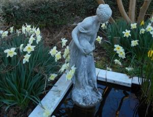 Ice Follies daffodils, a favorite, embrace Ariadne