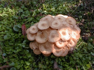 Fungi like these mushrooms play a big role in breaking down organics into nutrients that plants can use