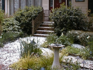 Snow in April? No, even fallen petals from our crabapple will help improve our soil in their small way