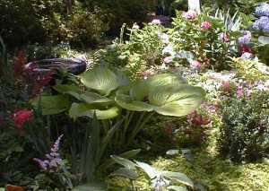 Hosta, astilbe, impatiens did fine here