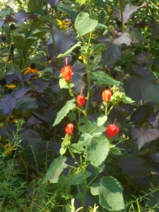 Turks cap and perilla hopped into the bed, so they stayed