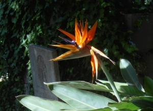 Somehow the bird of paradise hovering seems appropriate
