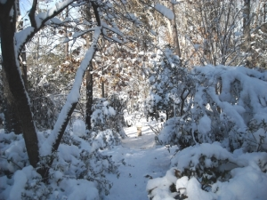 Pathway to our armillary, that tiny stand in the snow