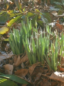 Harbingers of spring