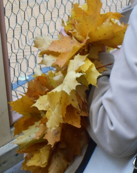 Autumn leaves are collected and enjoyed in wreaths people are carrying