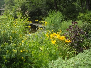 Joepyewee, St. Johnswort, perilla, woodland sunflower, boltonia, even daylilies and chrysanthemums attract pollinators in this crowded, sunny spot