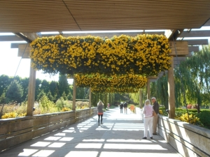 Pergola invites you into the Visitor Center