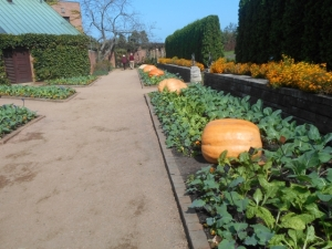 Pumpkins with marigolds