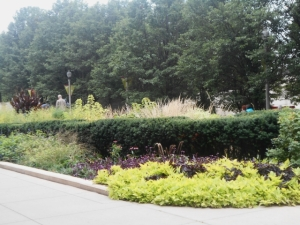 Evergreen hedges acts as foils for bright herbaceous plants