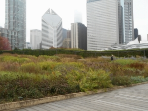 A prairie nudging skyscrapers. Note Ipe paths