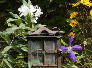 A trio of swamp sunflower, clematis and
