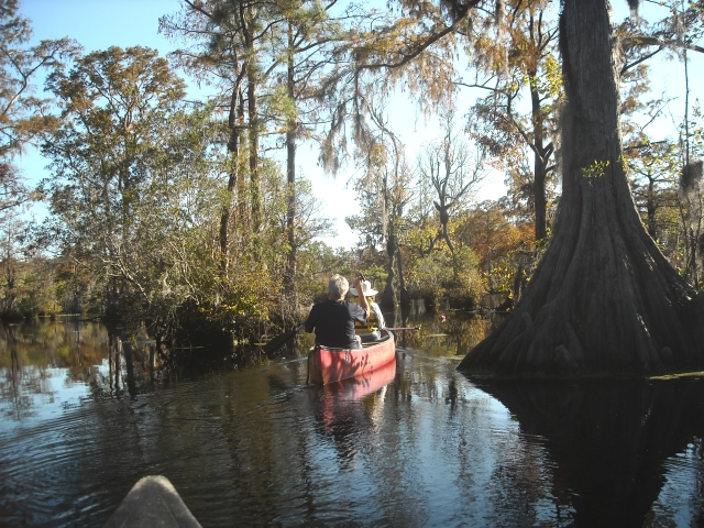 A leisurely paddle in one of the most scenic places in North Carolina, Merchants Millpond State Park. Ranger stayed behind in the parking lot